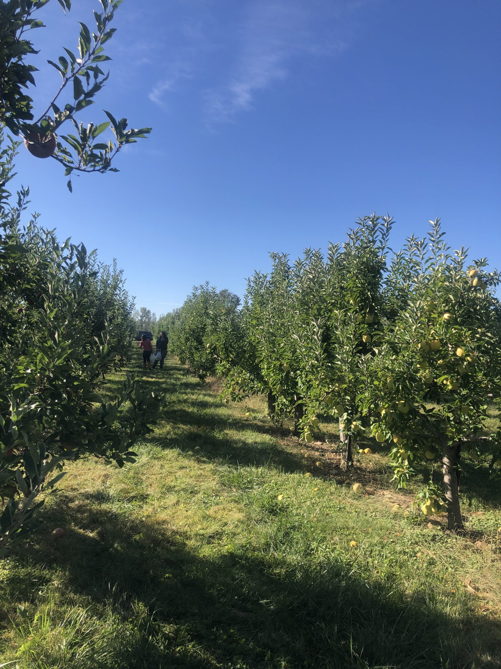 lynd's fruit farm in columbus ohio